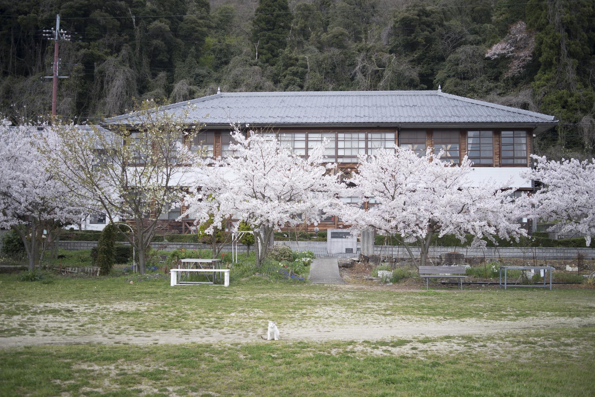 沖島小学校(沖島)