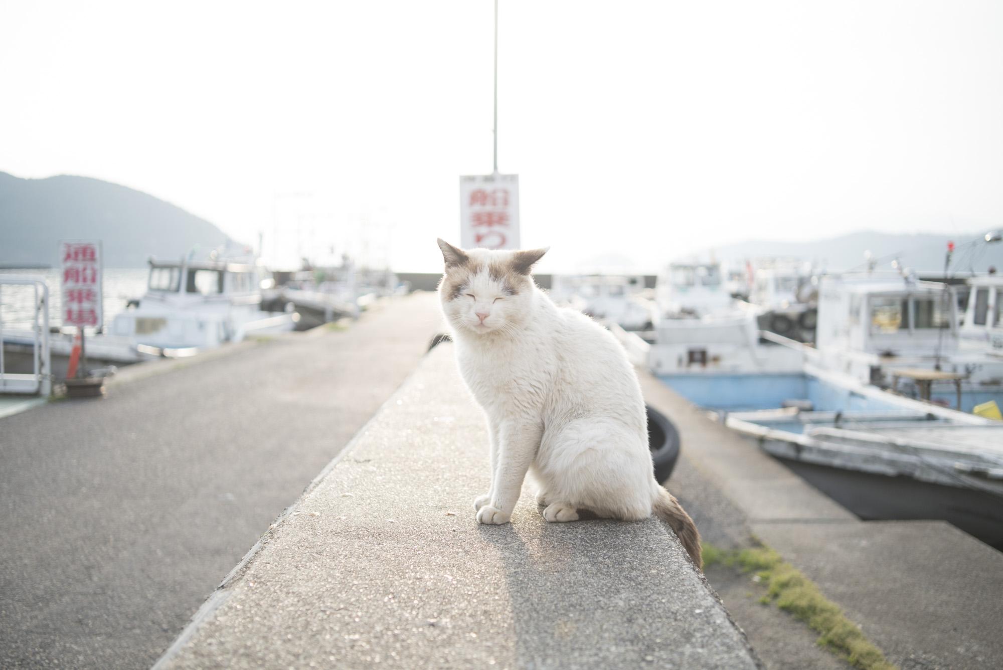 堀切港の猫