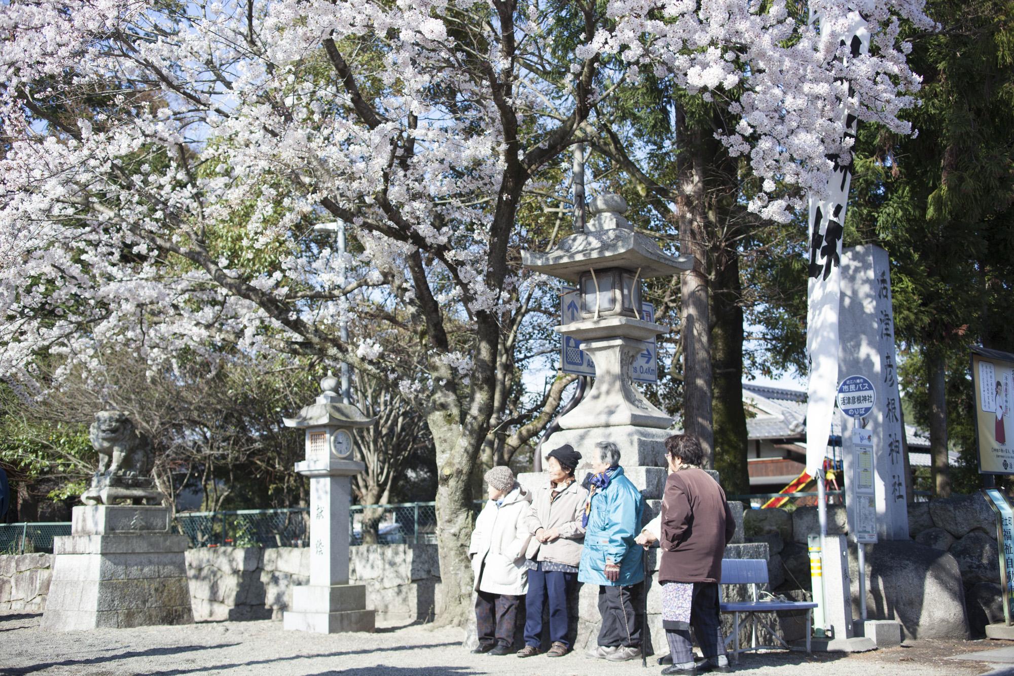 活津彦根神社(安土)の祭禮